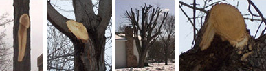 Improper Tree Pruning